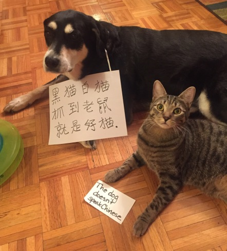 Chinese Dog and Cat