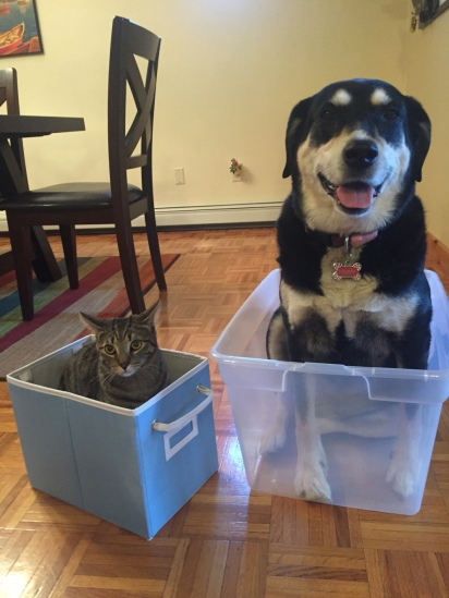 Get Organized Dog and Cat