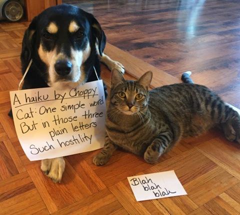 Haiku Blah Blah Blah Dog and Cat