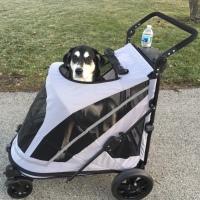 Dog Walk Challenge: Days 1,433 to 1,439