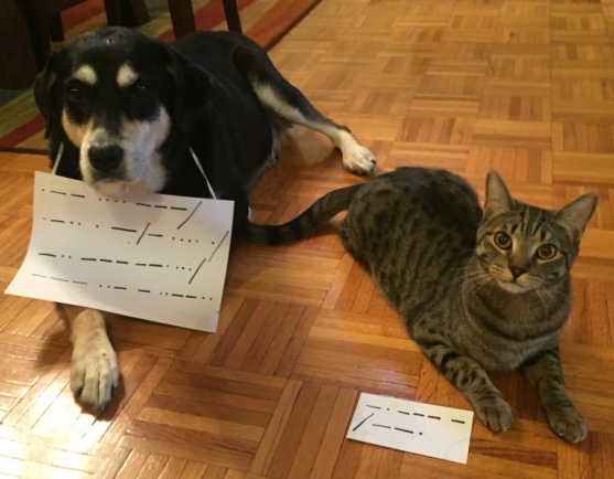 Morse Code Dog and Cat