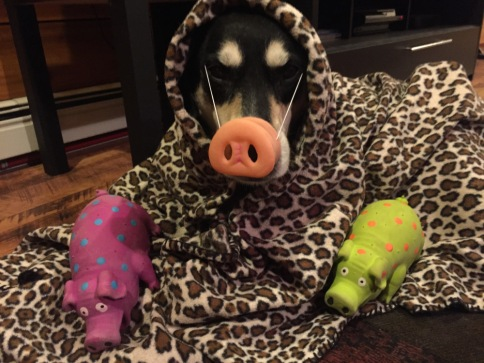 Pig in a Blanket Dog