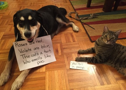 Poetry Cat and Dog