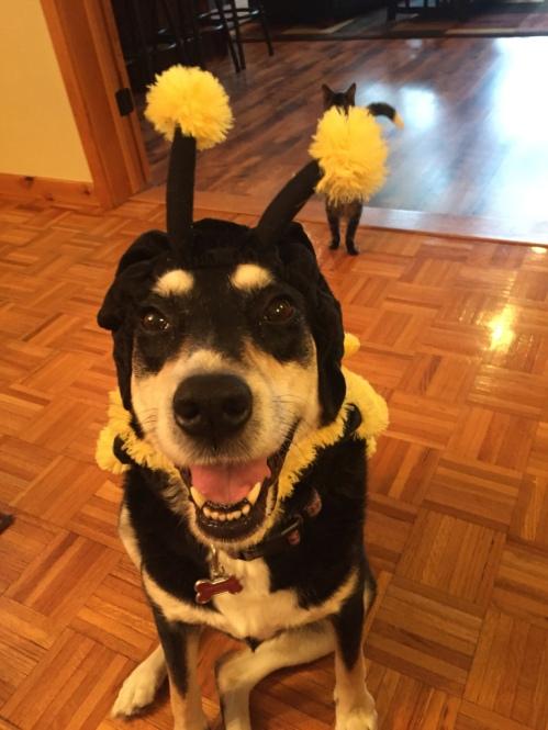 Bee Day Dog