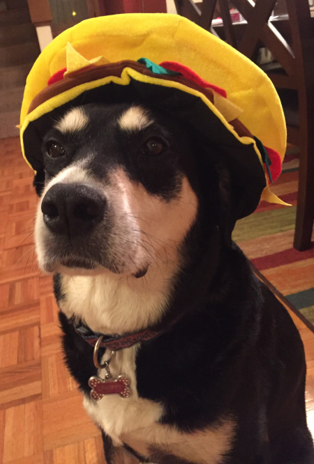 Hamburger Dog