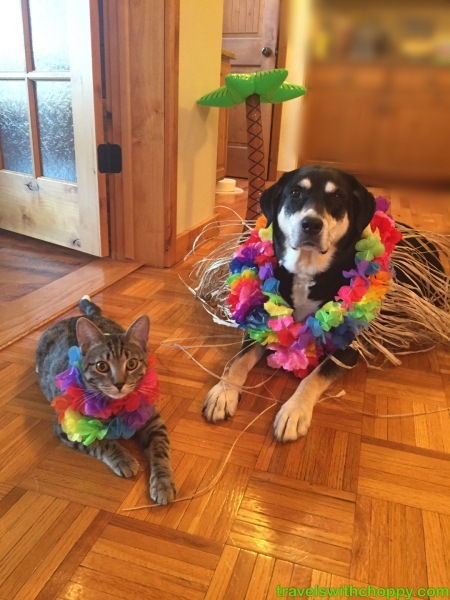 Lei Dog and Cat