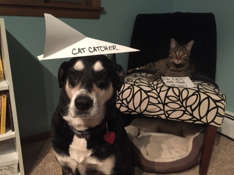 Paper Airplane Dog and Cat