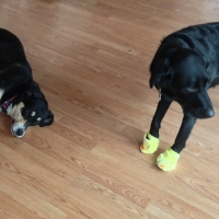 Midnight Mutts: Boot Time