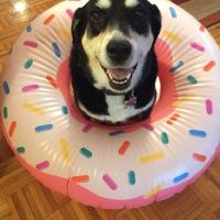 Howlidays: Doughnut Day