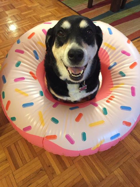 Doughnut Dog