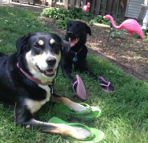 Flip Flop Dogs