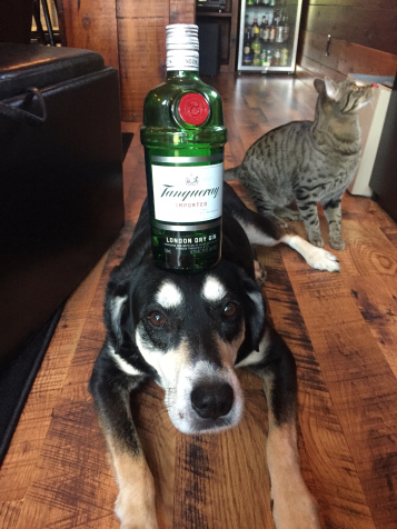 Gin Dog and Cat