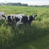 Weekend Wildlife: Moo Time