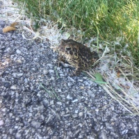 Weekend Wildlife: Toad Time