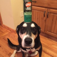 Howlidays: Insect Repellent Awareness Day