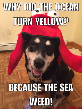 Lobster Joke Dog