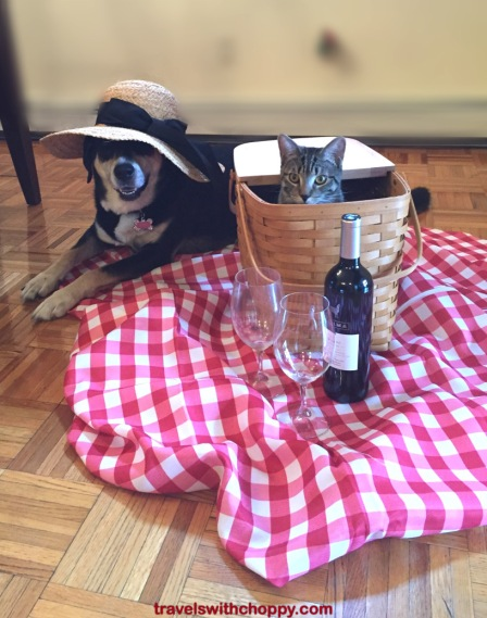 Picnic Dog and Cat