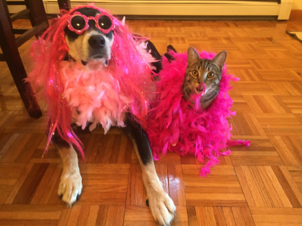 Pink Dog and Cat