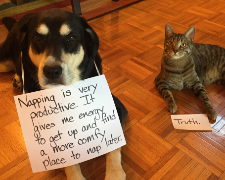 Productivity Dog and Cat