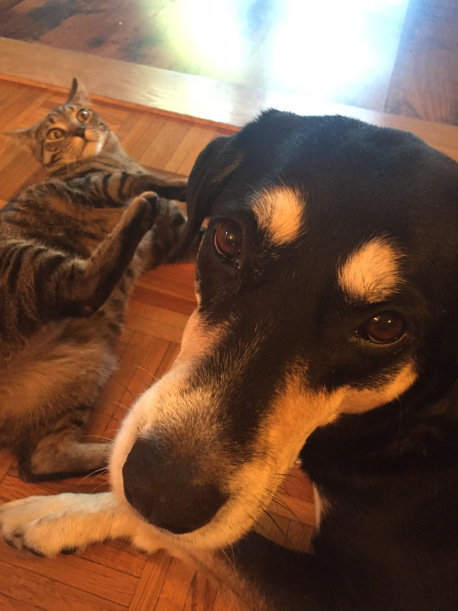 Selfie Dog and Cat