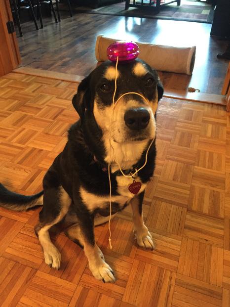 Yo-Yo Dog