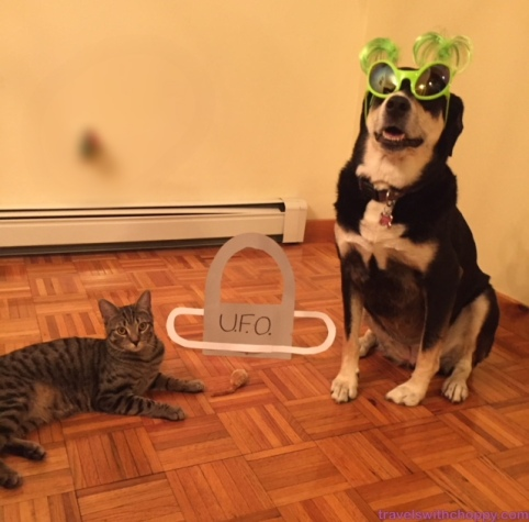 Alien Dog and Cat