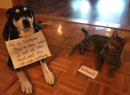 All or Nothing Cat and Dog