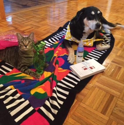 Bikini Dog and Cat