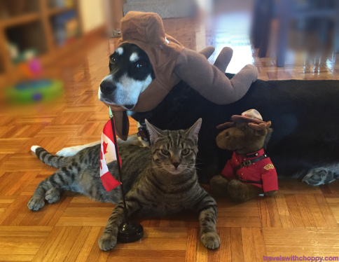 Canadian Dog and Cat