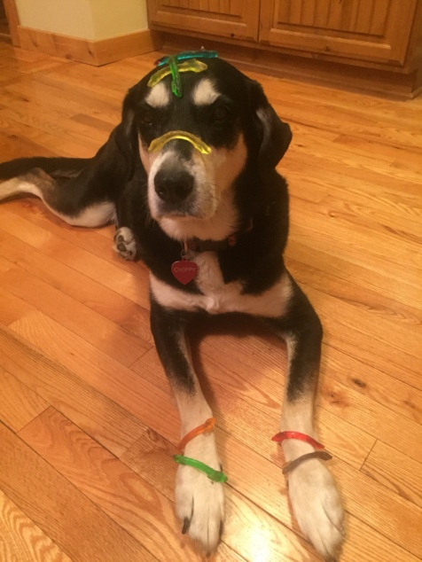 Gummi Worm Dog