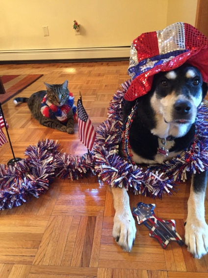 Independence Day Dog and Cat