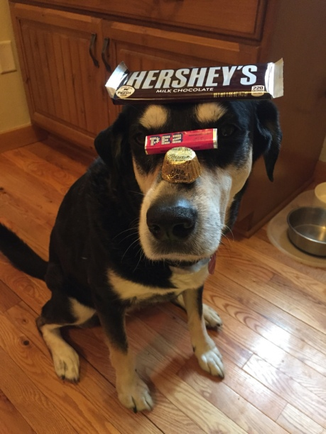 Junk Food Dog
