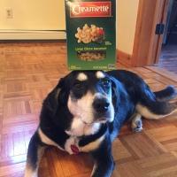 Howlidays: Macaroni Day