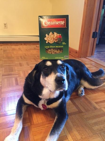 Macaroni Dog