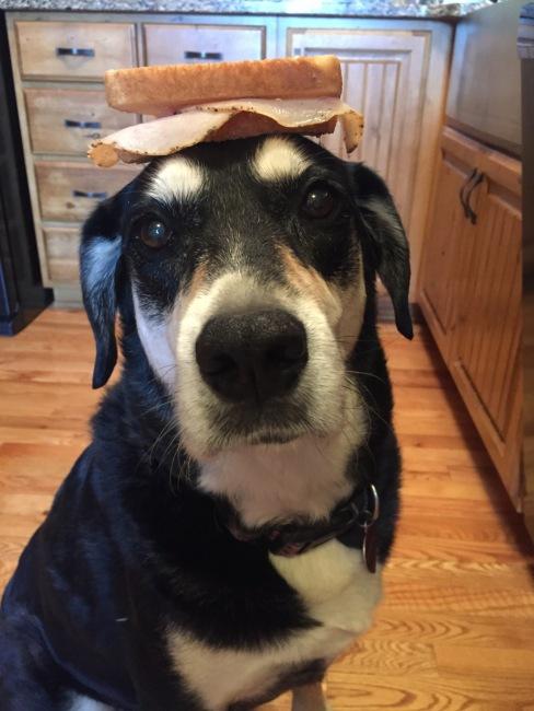 Sandwich Dog