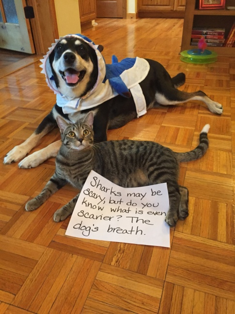 Shark Dog and Cat