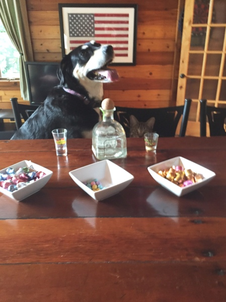 Tequila Dog and Cat