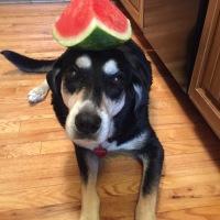 Howlidays: National Watermelon Month