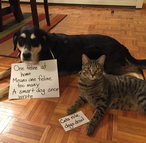 Bad Poetry Cat and Dog
