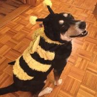 Howlidays: World Honey Bee Day