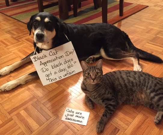 Black Cat Day Dog and Cat