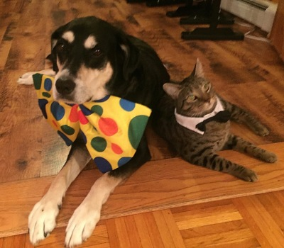 Bow Tie Dog and Cat