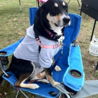Midnight Mutts: Tailgate Throwback