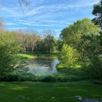 Backyard View: July 2020
