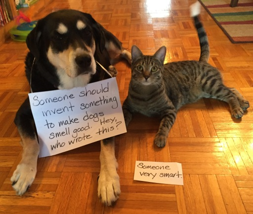 Inventor Dog and Cat