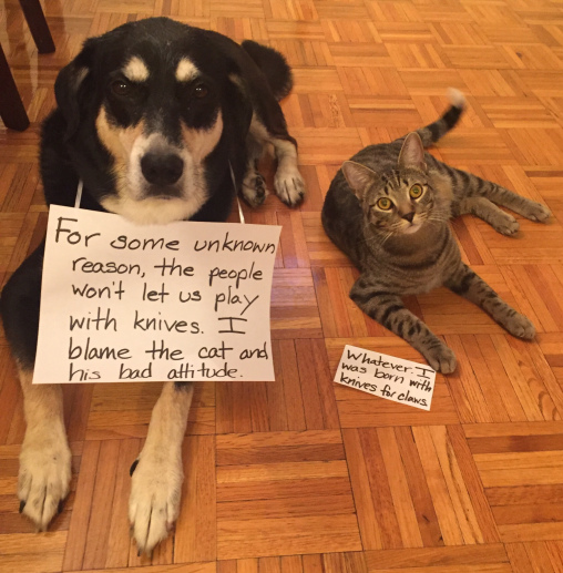 Knife Cat and Dog