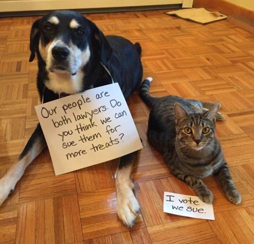 Lawyer Cat and Dog