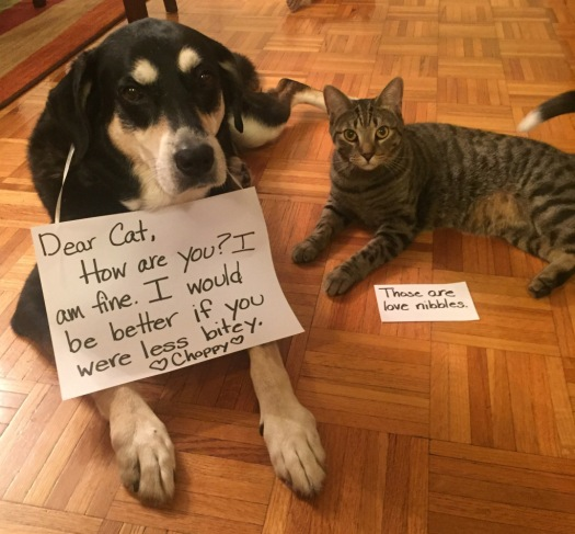 Letter Writing Cat and Dog