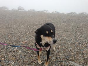 Mt. Washington Dog