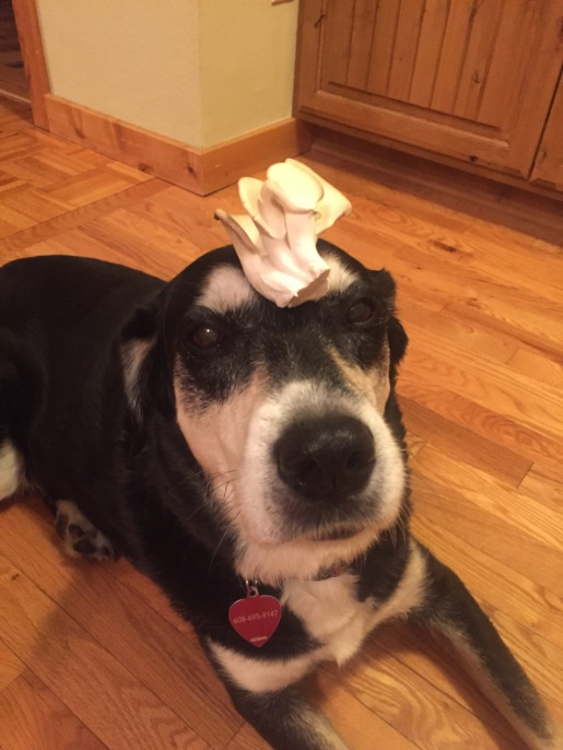 Mushroom Dog